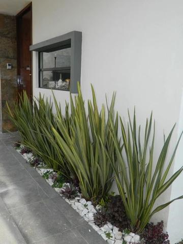 decoracion de entradas de casas jardin pequeño