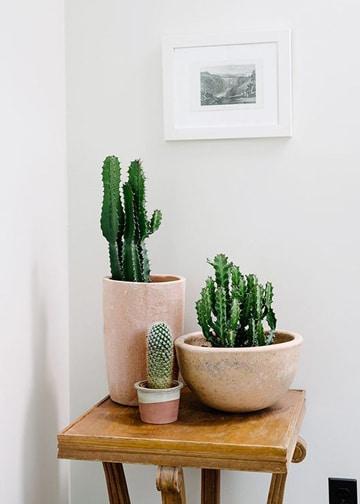 decoracion de interiores con plantas pequeñas