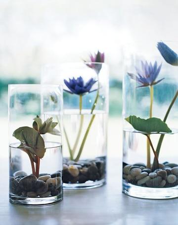 plantas de agua para interiores decorativas