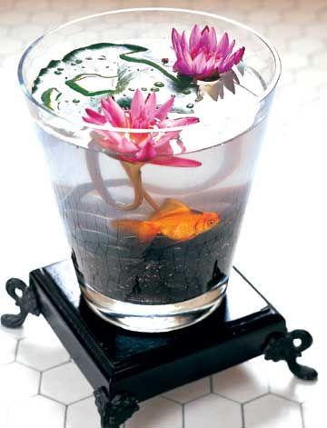 plantas de agua para interiores en pecera