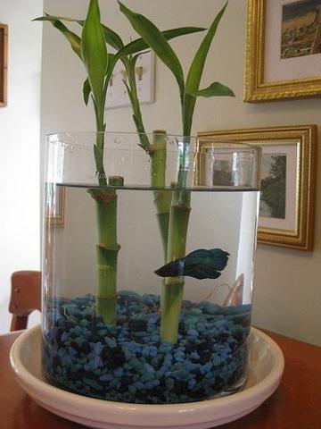 Decora tu casa con estas plantas de agua para interiores como decorar mi cuarto - Plantas de agua para interiores ...