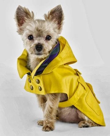 como hacer ropita para perros fashion