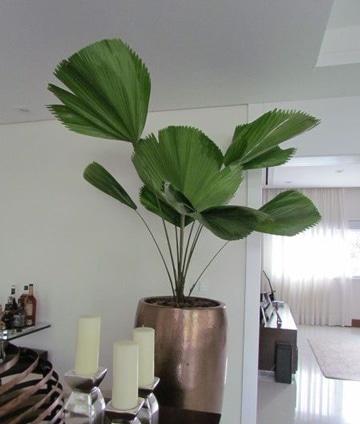 Adorna tu casa con plantas decorativas para interiores for Plantas de interior muy duraderas