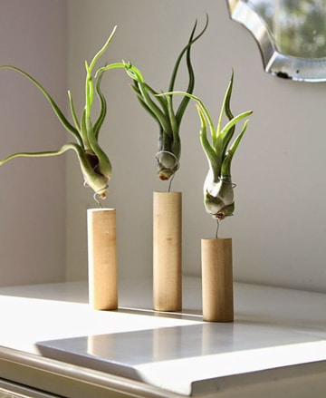 Adorna tu casa con plantas decorativas para interiores for Cactus para interior