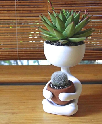 plantas decorativas para interiores super lindas