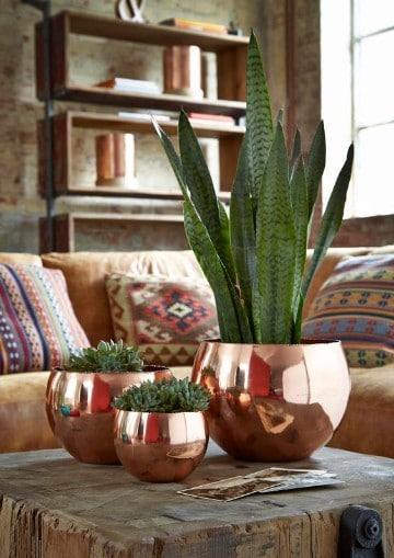 ideas para decorar con plantas de sombra para oficina