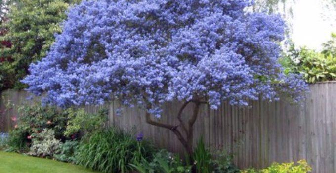 Arboles pequeos para jardin jardines pequeos y modernos for Arboles ornamentales jardin