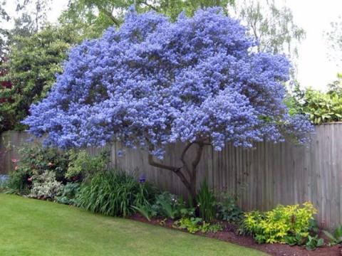 Maneras de decorar con arboles ornamentales para jardin for Arboles ornamentales jardin