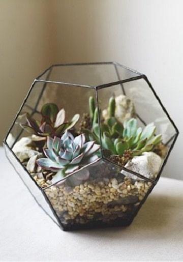 cactus en frascos de vidrio modernos