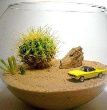 cactus en frascos de vidrio pecera