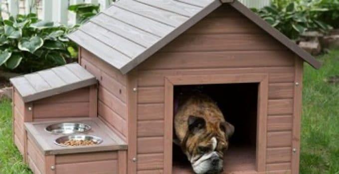 Como hacer casa para perros de carton hilarious porn for Como disenar mi casa