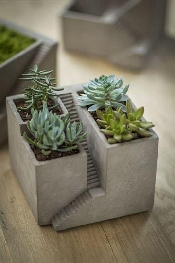 como hacer un terrario de cactus adentro