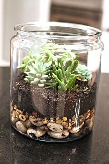 como hacer un terrario de cactus originales