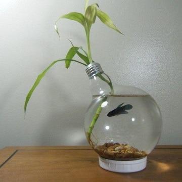 peceras redondas decoradas con plantas