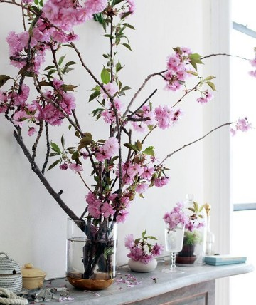 plantas para interiores feng shui positivas