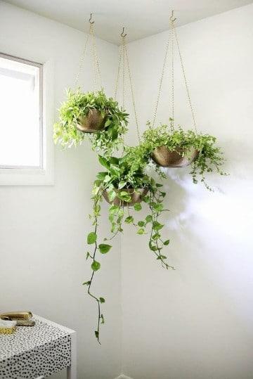 plantas para interiores feng shui protectoras