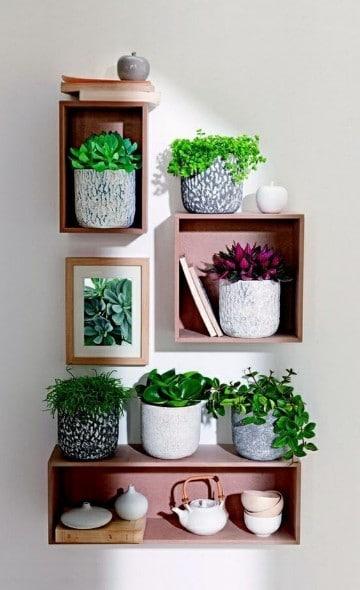 decoracion con plantas para interiores feng shui