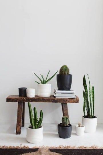 plantas para interiores oscuros pequeños