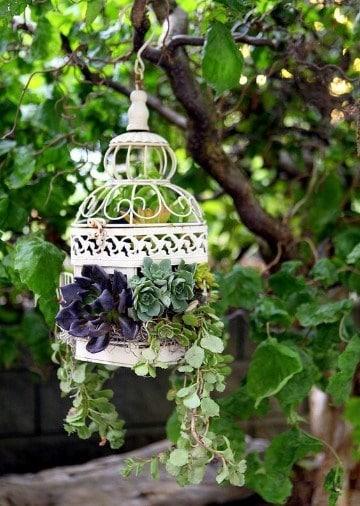 plantas para jardineras exteriores colgantes