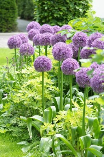 plantas para jardineras exteriores sol y sombra