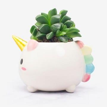 adornos para escritorio de oficina para plantas
