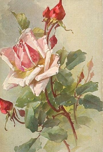 cuadros de rosas al oleo delicadas