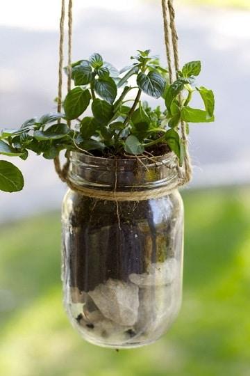 terrarios de plantas de interior colgantes