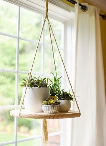 terrarios de plantas de interior maceteras