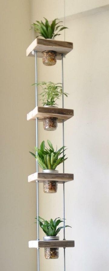 terrarios de plantas de interior varios
