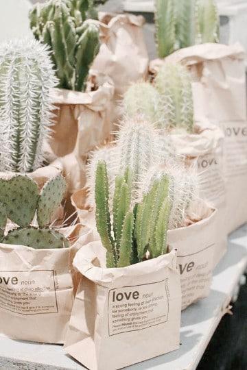 beneficios de los cactus en casa en bolsas