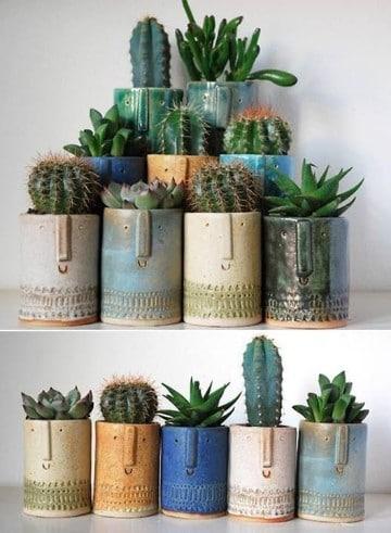 beneficios de los cactus en casa en tazas