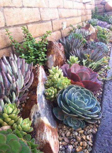 plantas para decorar jardines y patios