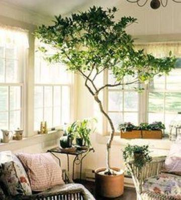 plantas para dentro de la casa arboles