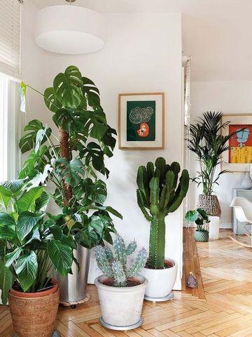 plantas para dentro de la casa con poca luz