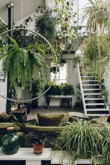 plantas para dentro de la casa tipo jungla