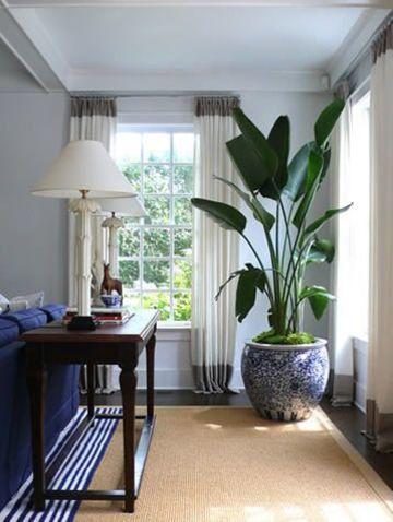 plantas decorativas para interiores grandes
