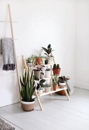 plantas decorativas para interiores pequeñas