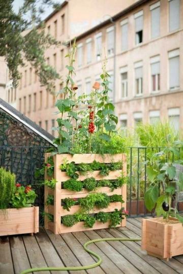 como hacer un huerto en la terraza departamento