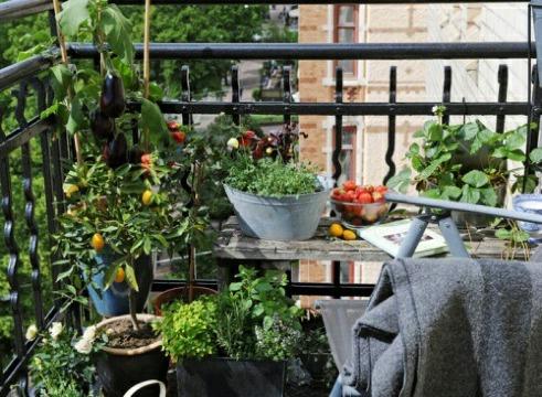 como hacer un huerto en la terraza o balcon