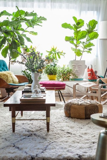 decorar salon con plantas naturales tropicales
