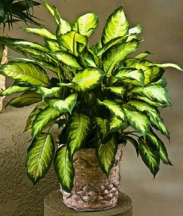 las mejores plantas para interiores con poca luz