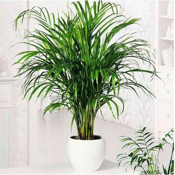 las mejores plantas para interiores grandes