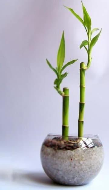 las mejores plantas para interiores segun el fen shui