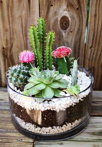 arreglos de cactus en vidrio decoracion de mesa