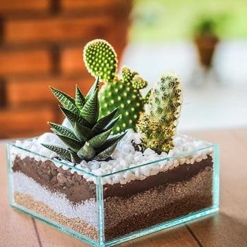 arreglos de cactus en vidrio decorativas