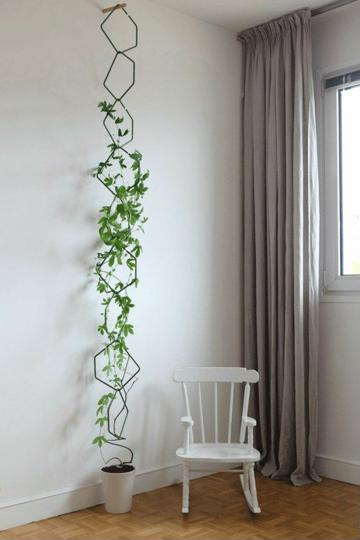 plantas de ornato para interiores con poca luz