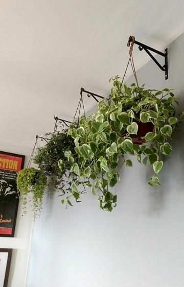 plantas de ornato para interiores decoracion