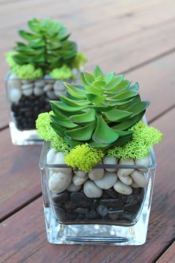 plantas de ornato para interiores elegante