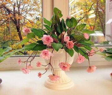 fotos de plantas de interior con flor