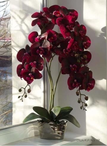 imagenes de plantas de interior con flor